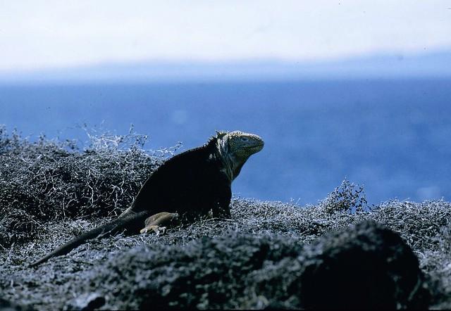 Galapagos slide 1983