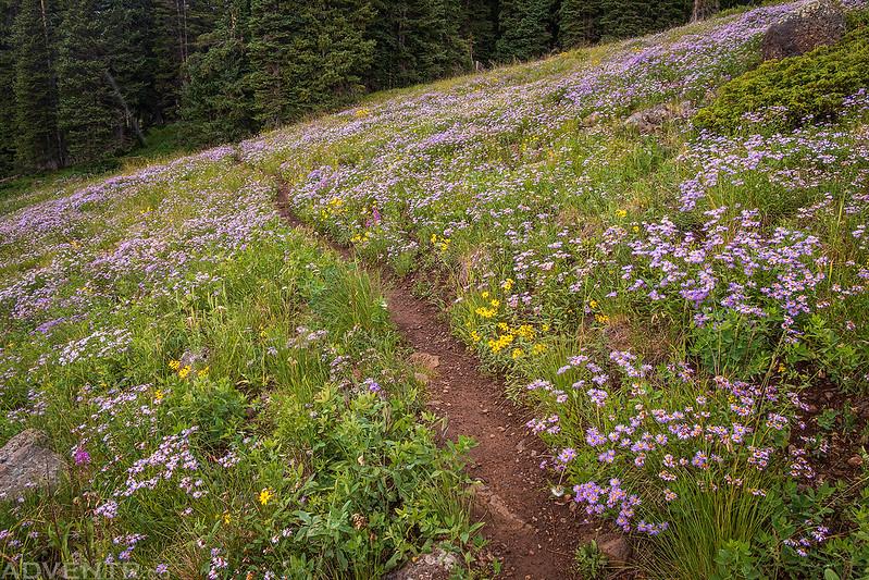 Wildflowers Trail