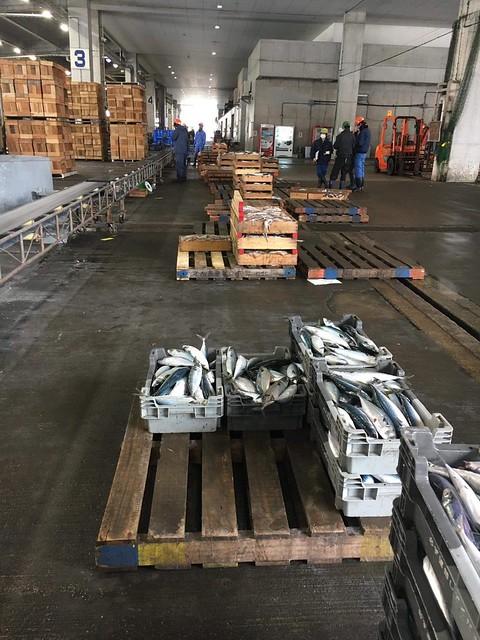 hv23 xưởng cá 2