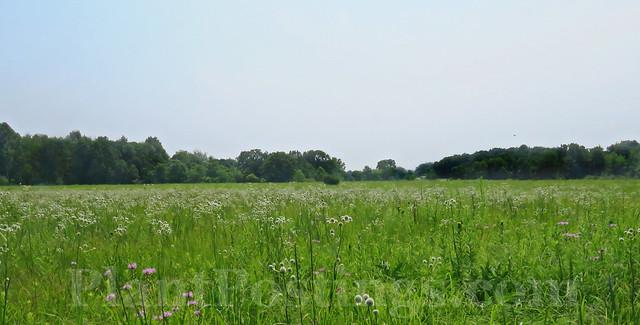 prairie midsummer