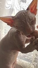 Tutan having a nibble