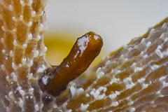 Microscopy-256.jpg