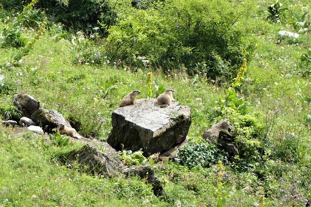 08.02.21.Les Marmottes (Foron)