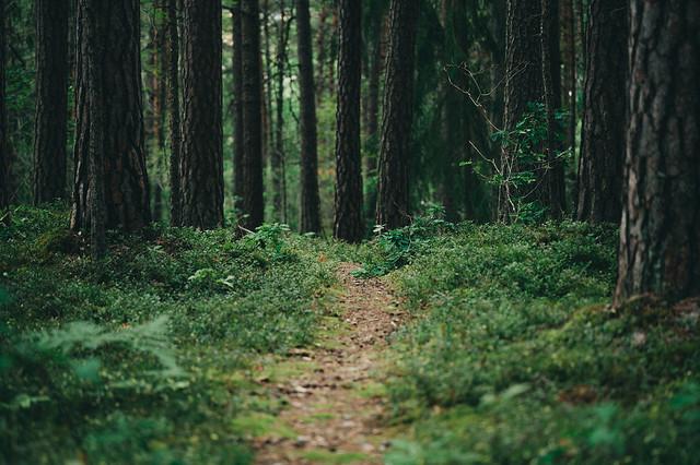 Vrinnevi Forest