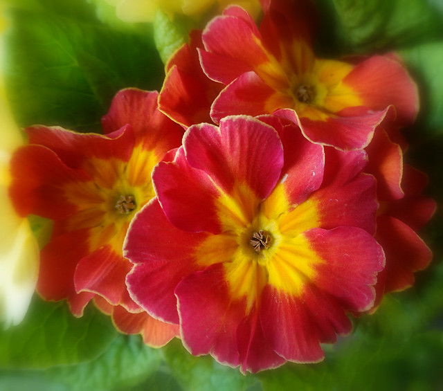 Flowers... are a proud assertion that a ray of beauty outvalues all the utilities of the world. (Ralph Waldo Emerson)