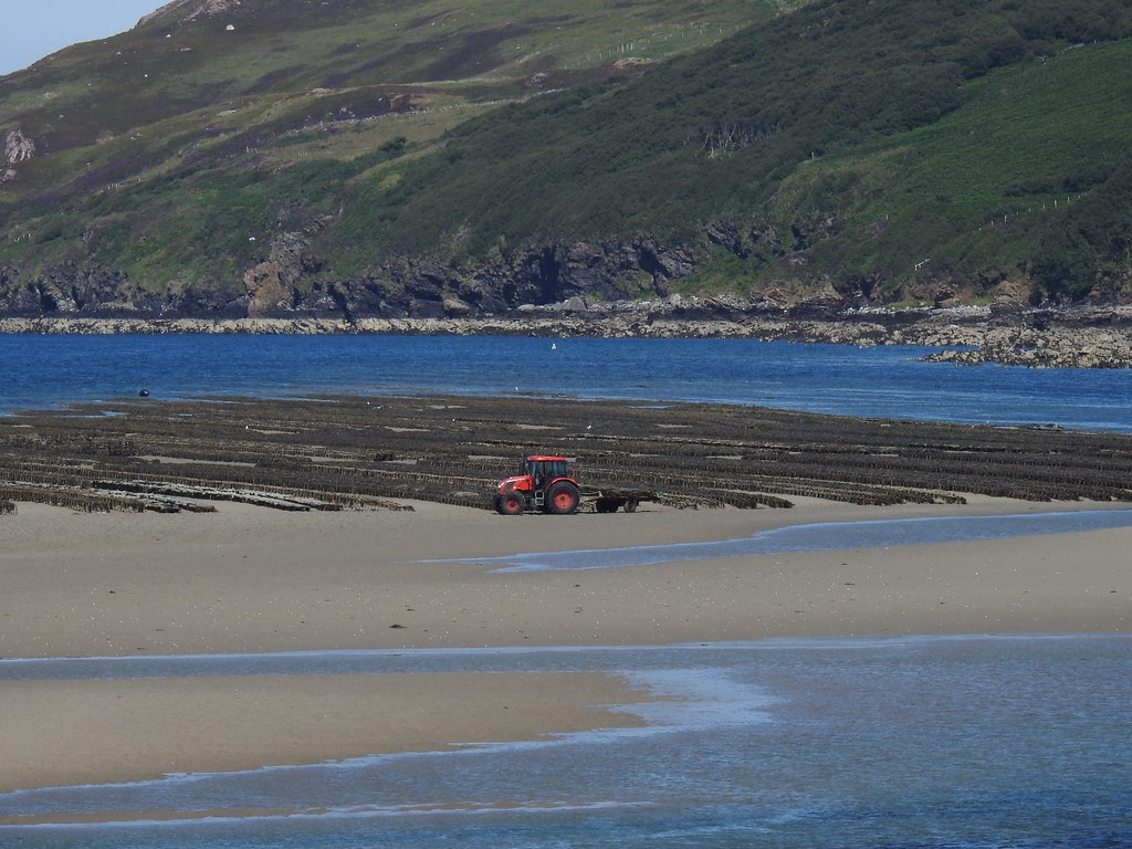 Oyster Beds, Kyle of Tongue