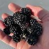 Though I love my iPhone, I'm still an avid blackberry user…
