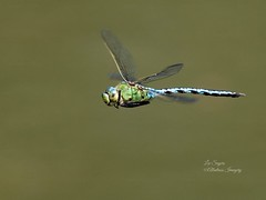 The Happy Dragonfly
