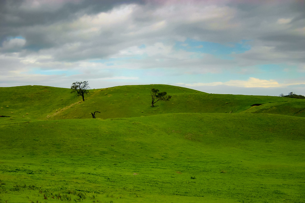 Rolling green hills covered in soft flowing grass