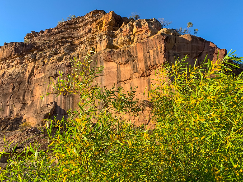 Wattle and Cliff