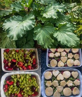 Cobbler de rhubarbe et prunes à la vanille et badiane 5