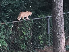 Cat ud83dudc08 on the fence