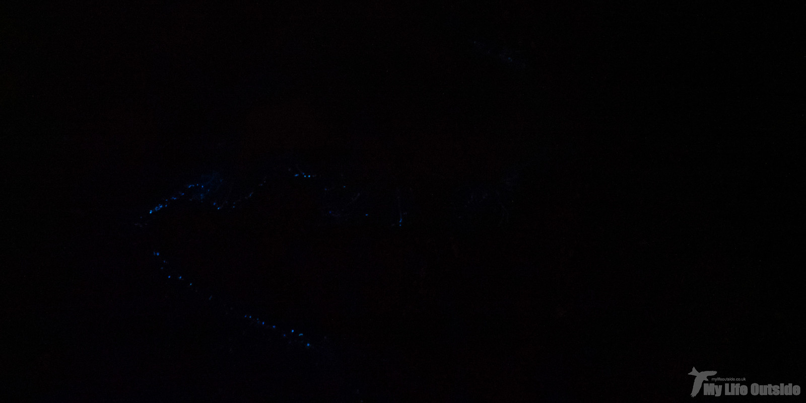 P7013452 - Bioluminescent Plankton, Aberavon