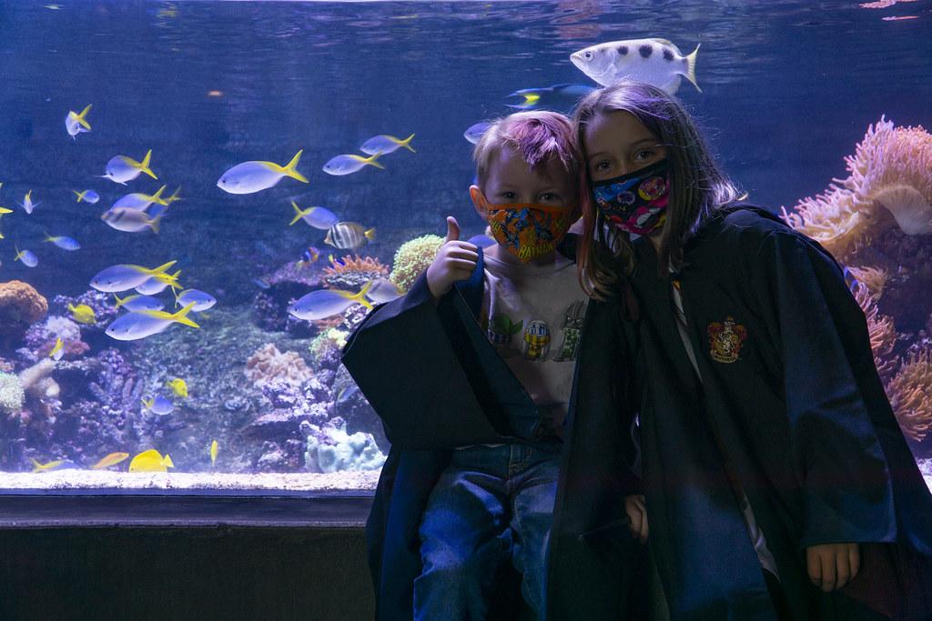 Potter Underwater