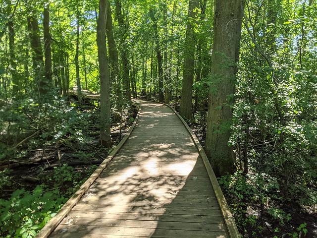 Wild Goose Woods