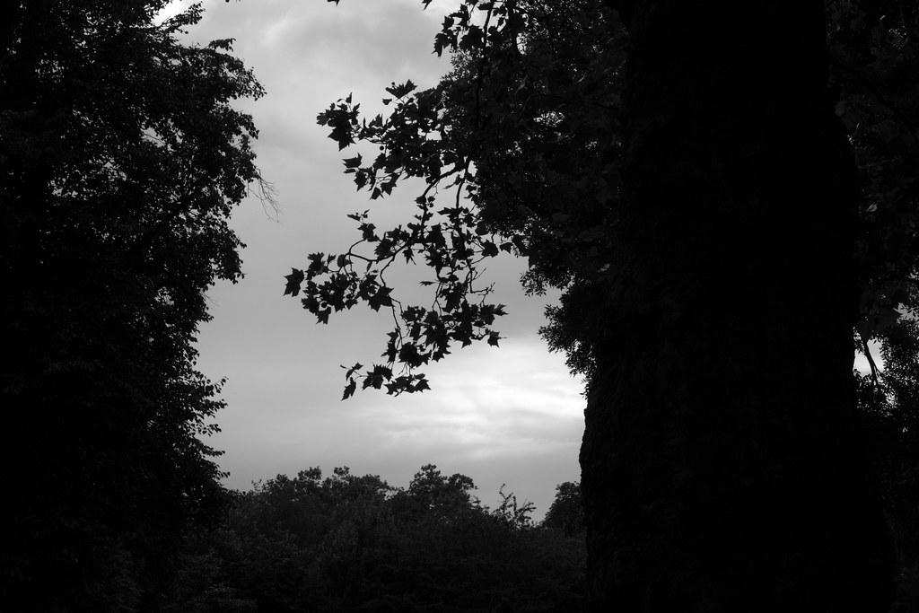 Queens Park Tree