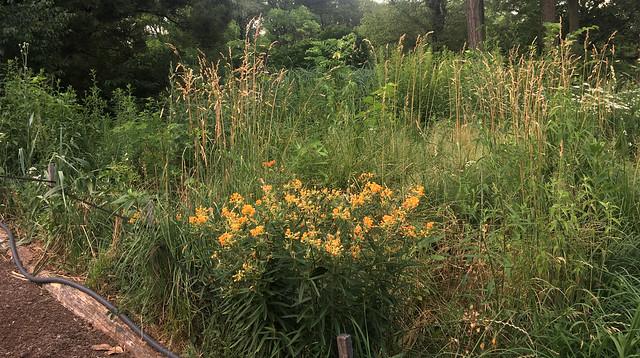 Central Park Bouquet