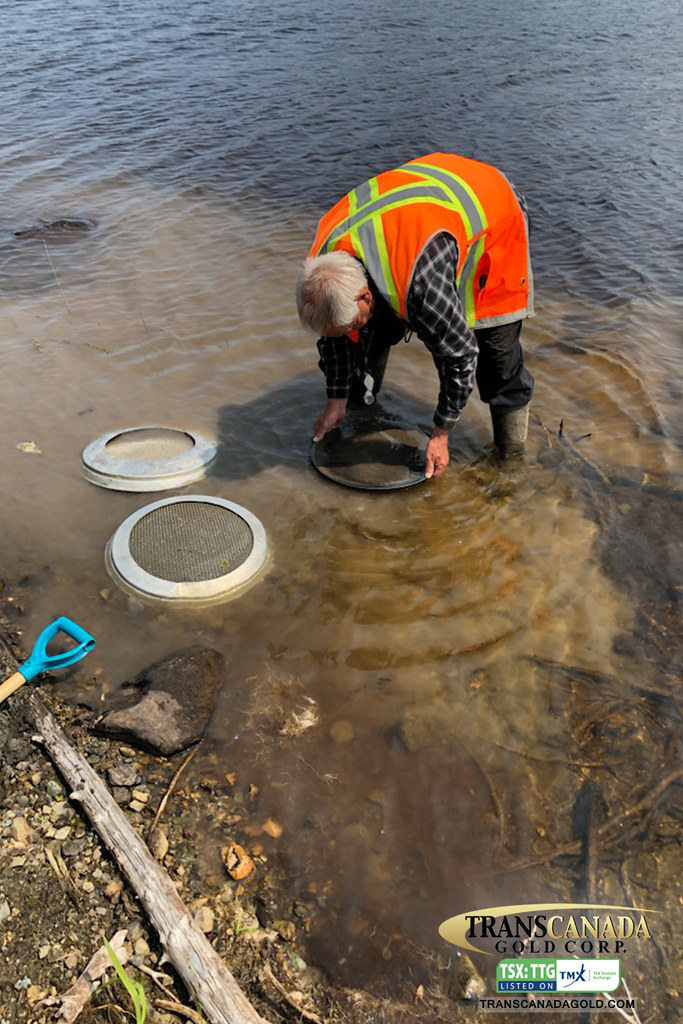 Robust Gold in lake sediment and till samples © Trans Canada Gold Corp. (TSX-V: TTG)