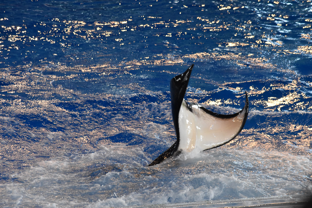 SeaWorld2021-25