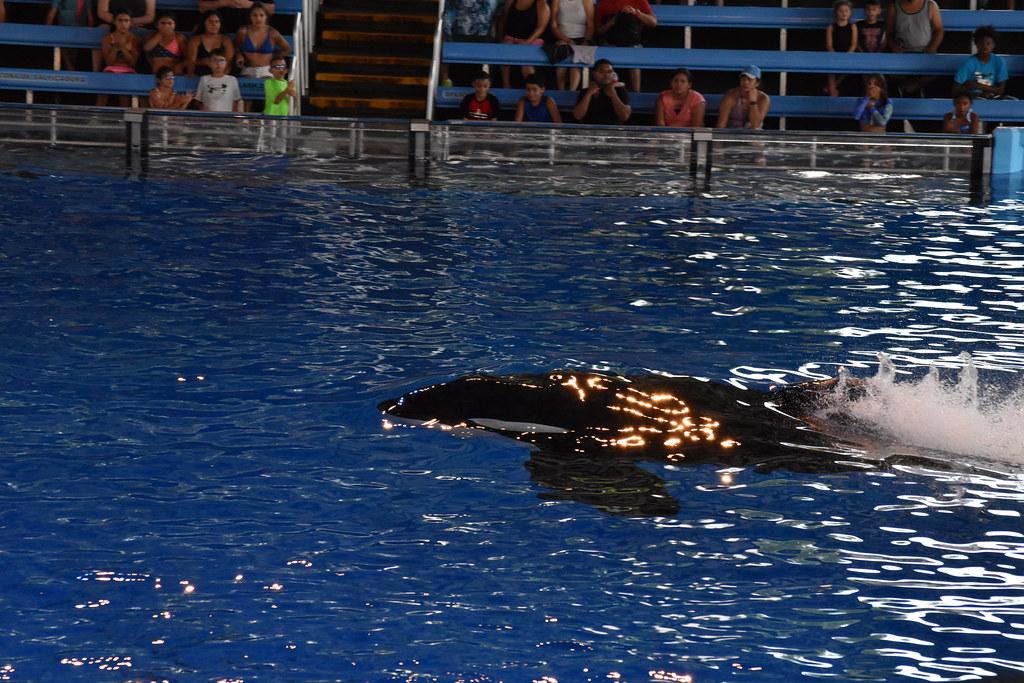 SeaWorld2021-22