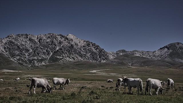 IMGP7699 Pastures