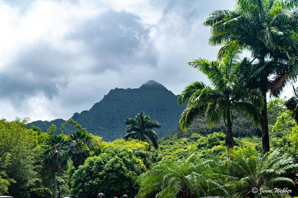 Hawaii mountain and palm trees