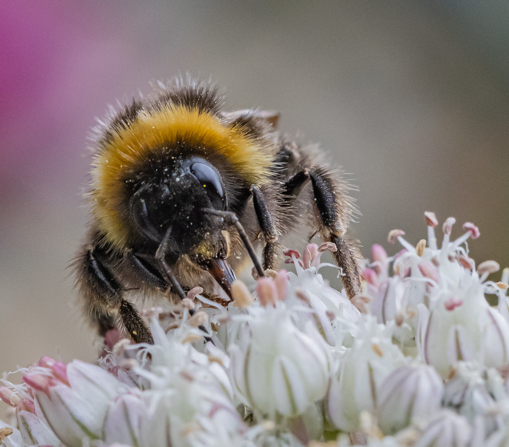 Bee Hunter