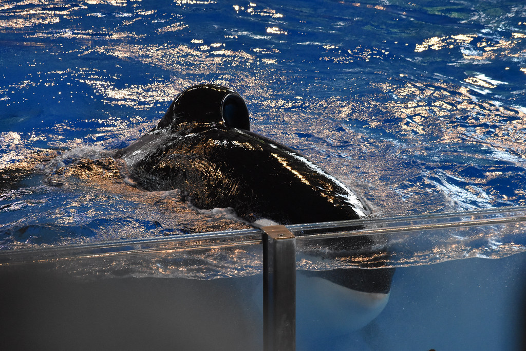 SeaWorld2021-26