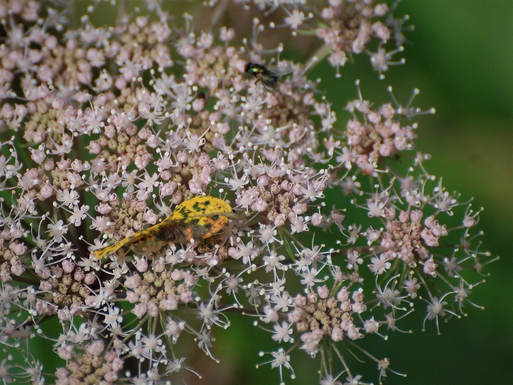 Feuille insecte