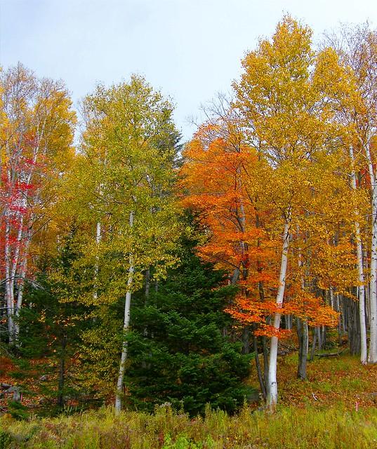 N.H. Fall Tree Colors