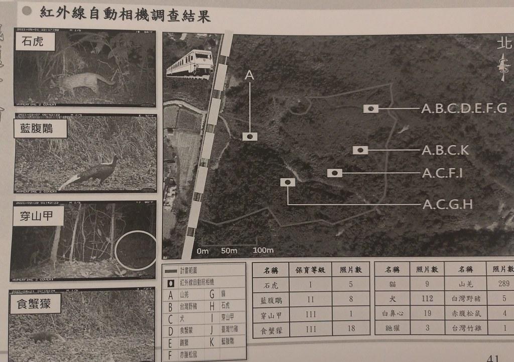 開發單位所做的生態調查確實有在基地內發現石虎、穿山甲等保育類動物。翻攝會議自廖