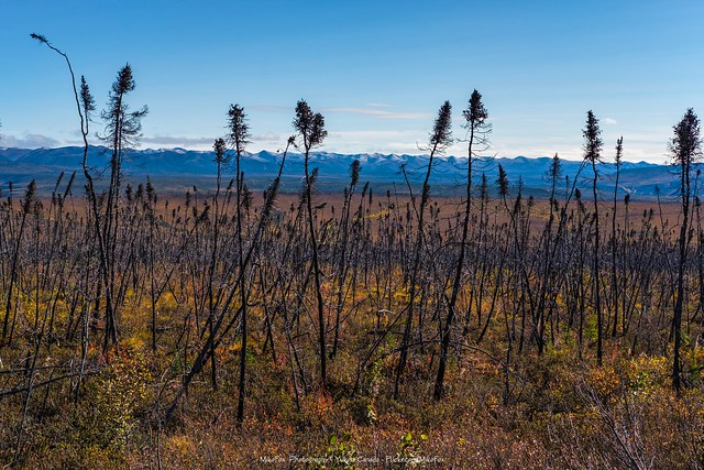 Land of the Thin Sticks - Eagle Plateau
