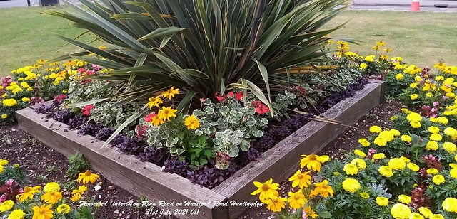 Flowerbed (insert) on Ring Road on Hartford Road Huntingdon 31st July 2021 011