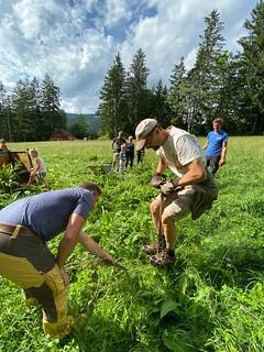 So bekämpfen Bio-Bauern ihren Ampfer 💪