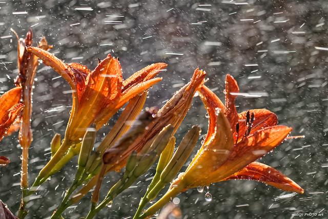 Showering flowers