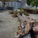Omgevallen boom bij kapel