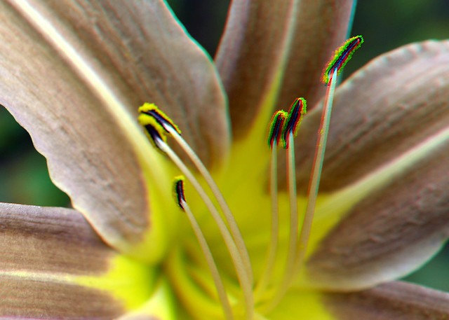 Flower Blijdorp Zoo 3D 40mm