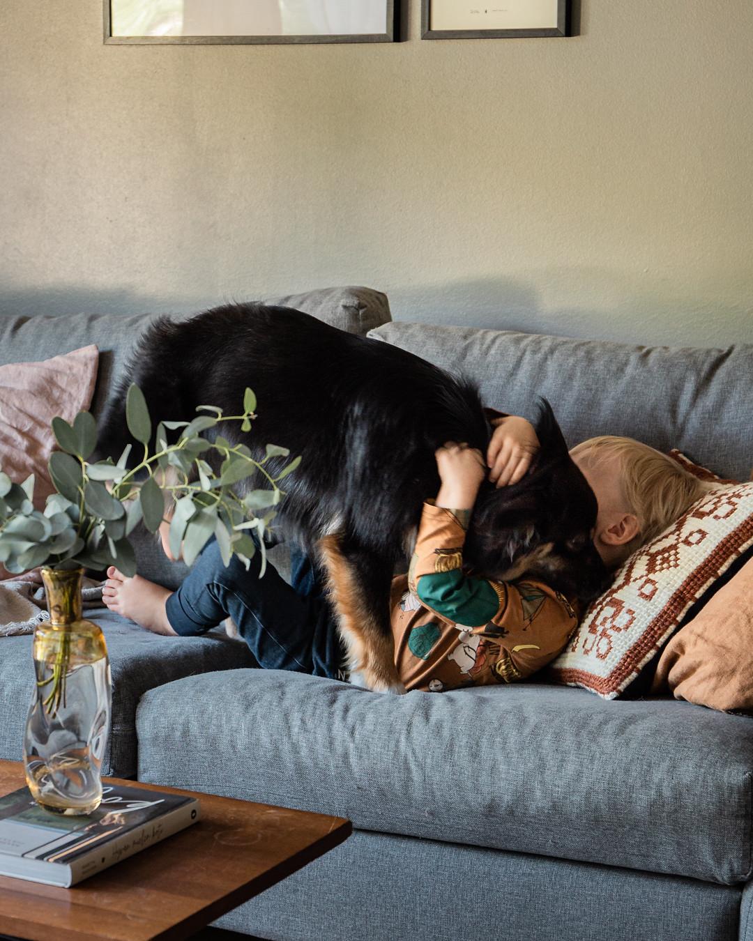 koiran totuttaminen lapsiin-pinossa__MG_2090
