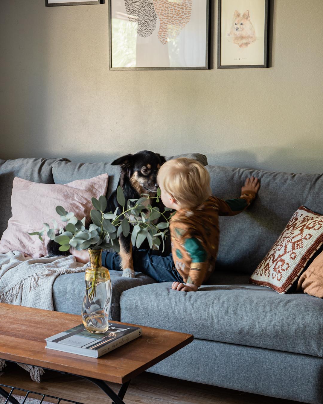 koiran totuttaminen lapsiin-pinossa__MG_2079