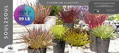 Soul2Soul. Phormium Planters for 99L Popup Week by Tres chic