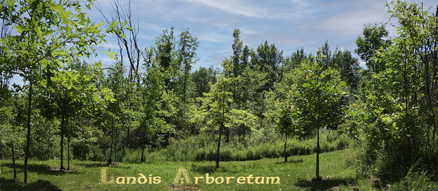 The Landis Arboretum - Schoharie - New York