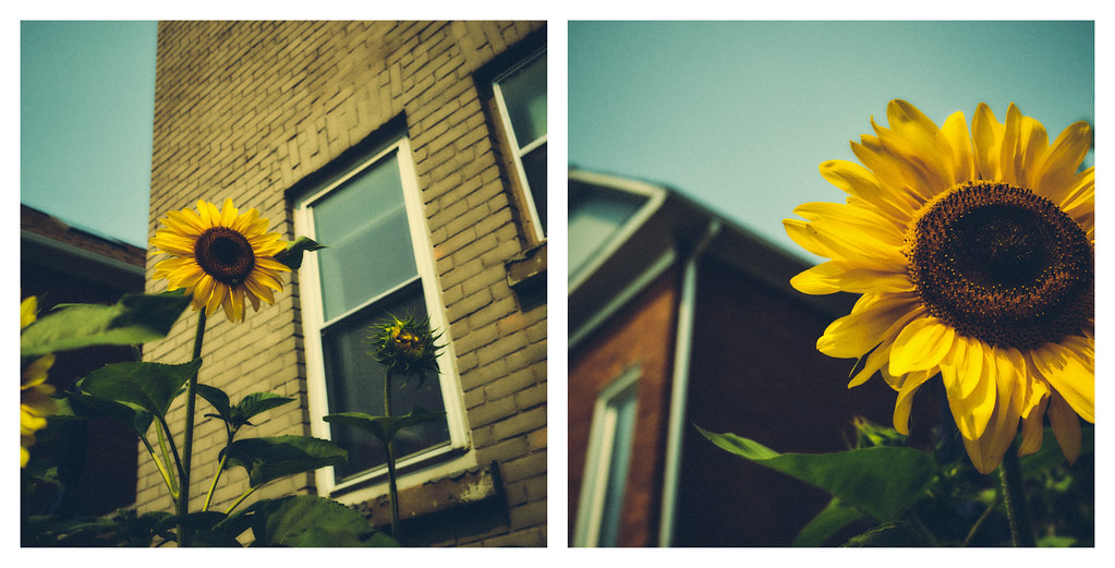 215/365 : Hot town, summer in the city