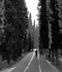 Walk To The Gardens