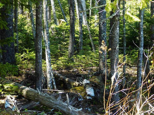 Salt Pond Preserve Forest #1