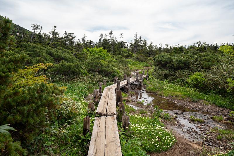 八甲田山の湿原エリア