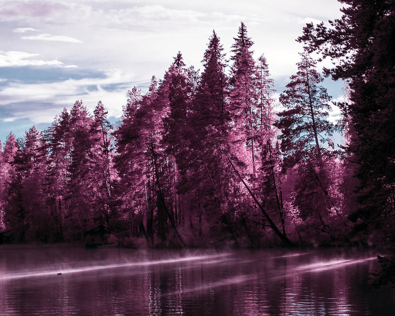 Infrared of the day 65