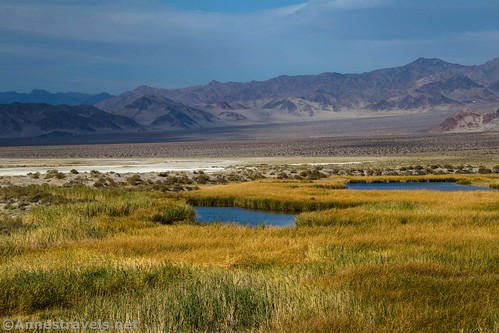 Close up of two of the Saratoga Springs, Death Valley National Park, California