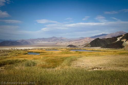 Views across the Saratoga Springs, Death Valley National Park, California