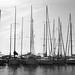 Un' ora al porto di Livorno