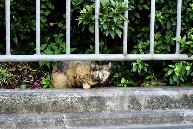 Today's Cat@2021−08−04